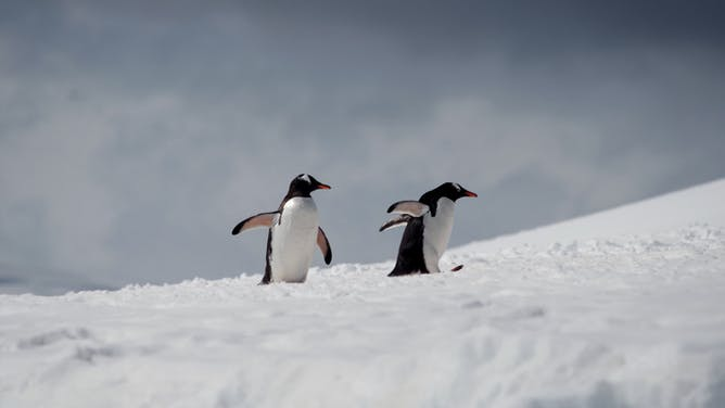 Photo Gallery Antarctica Fly & Cruise