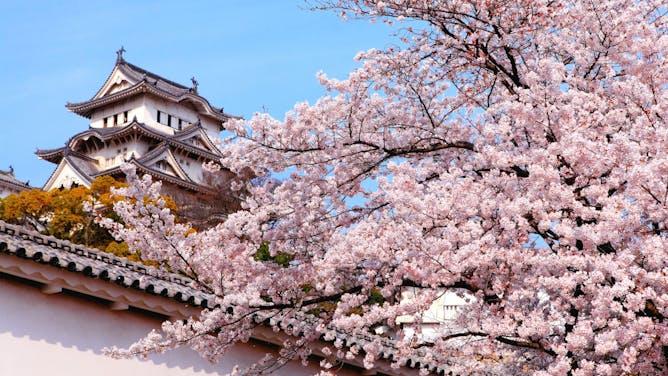 Photo Gallery of the Week: Walking Japan