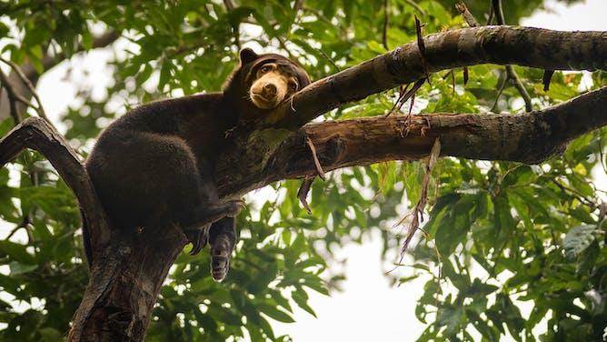 Explore the Wonders of Borneo