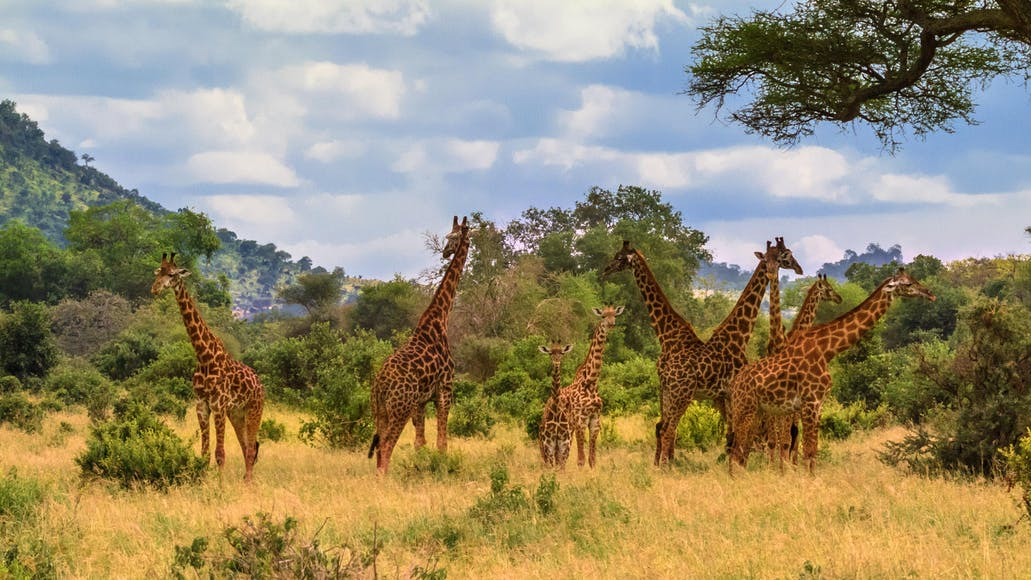 Epic Moments on an East African Safari