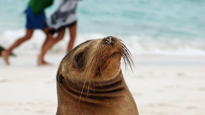 Best Time To Visit the Galapagos Islands