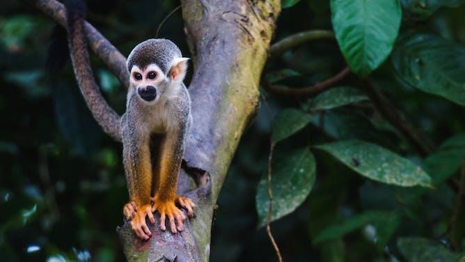 Celebrating the New Millennium in Costa Rica