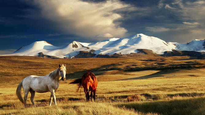 10 Reasons to Go Horse Trekking in Mongolia