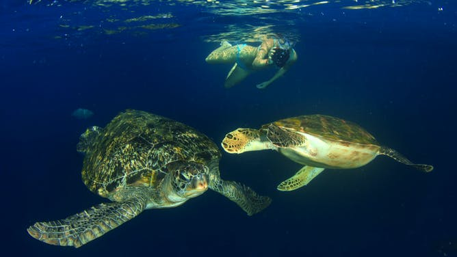 5 Things You Can Expect in the Galapagos Islands in November & December