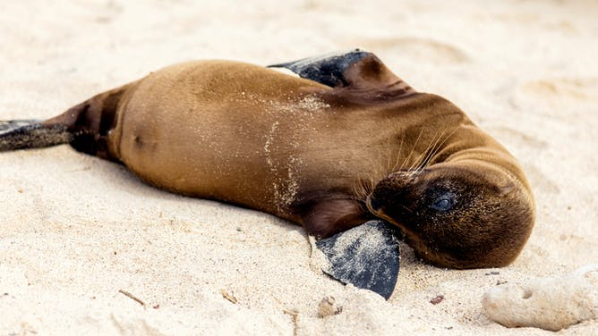 Webinar: Visit the Galapagos Through the Eyes of an Expert