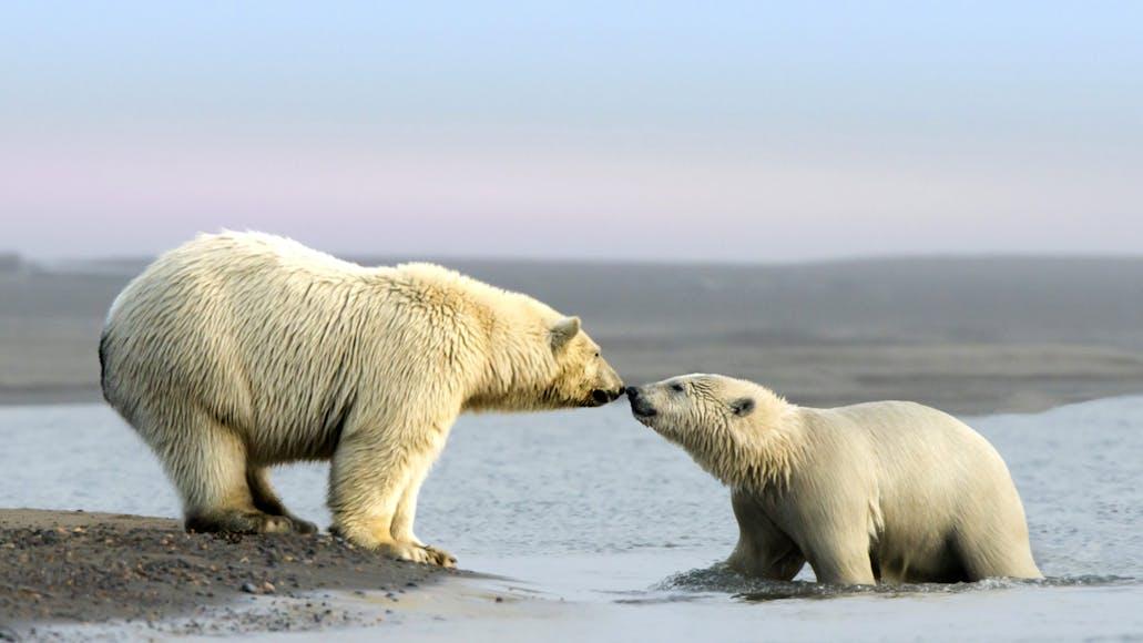 Top 10 Favorite Nature Documentaries