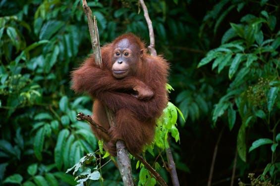 Webinar: Explore Wild Borneo