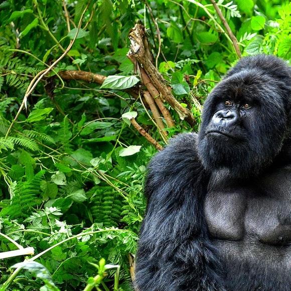 Uganda Adventure Tours