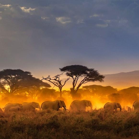 Kenya Adventure Tours
