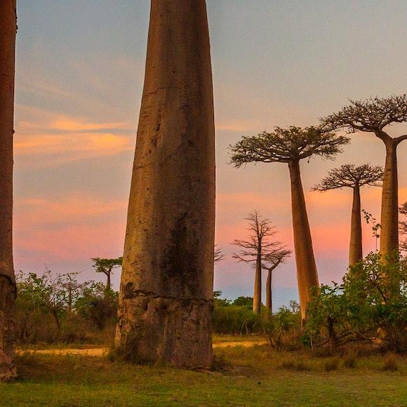 Madagascar Adventure Tours