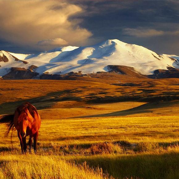 Mongolia Adventure Tours