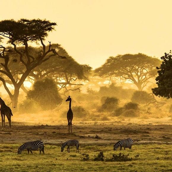 Africa Adventure Tours & Safaris