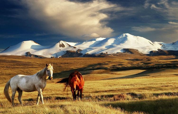 horses at sunset - Mongolia Horse Trek