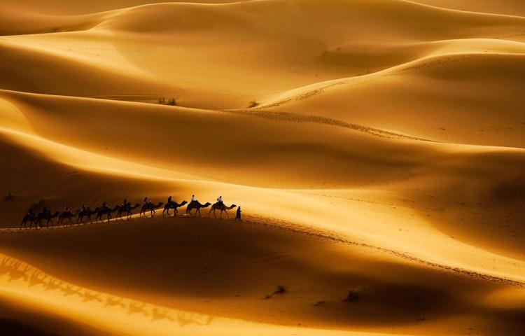 camel train