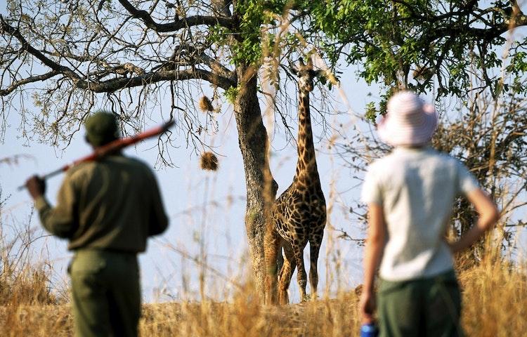 walking safari - Tanzania Ultimate Serengeti Active Safari