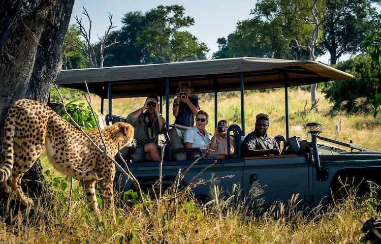 stretching cheetah and vehicle