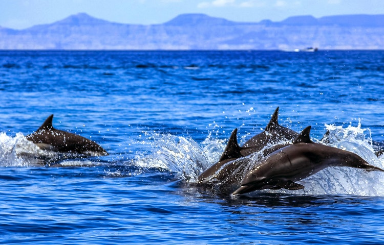 dolphins - Mexico Baja Glamping Private Adventure