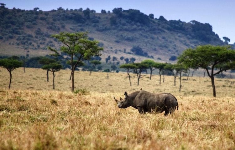 rhino - Tanzania and Kenya Classic Safari Private Adventure