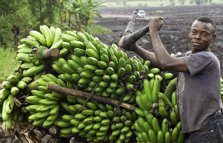 banana hauler - Rwanda Primate Adventure