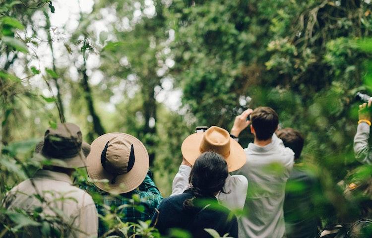 looking up - Rwanda Primate Adventure