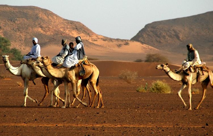 camel riders in the desert