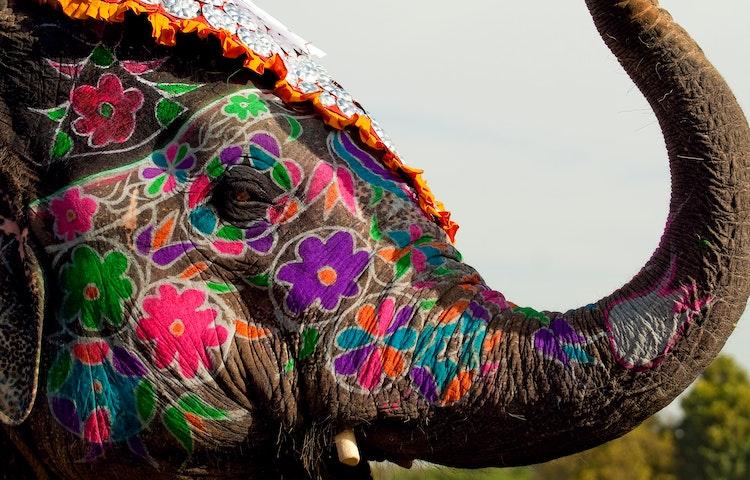 elephant - India Royal Rajasthan & Pushkar Camel Fair