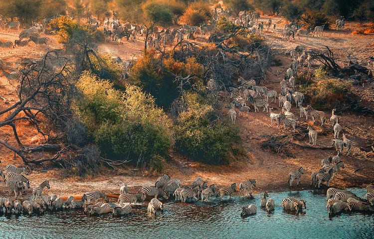 zebra at the river - Angola Expedition