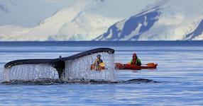 Antarctica Crossing the Antarctic Circle Adventure Cruising