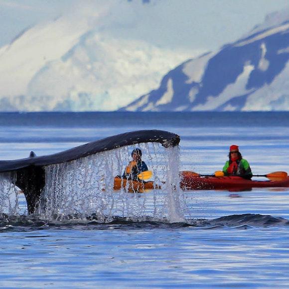Antarctica Crossing the Antarctic Circle Adventure Cruising | MT Sobek