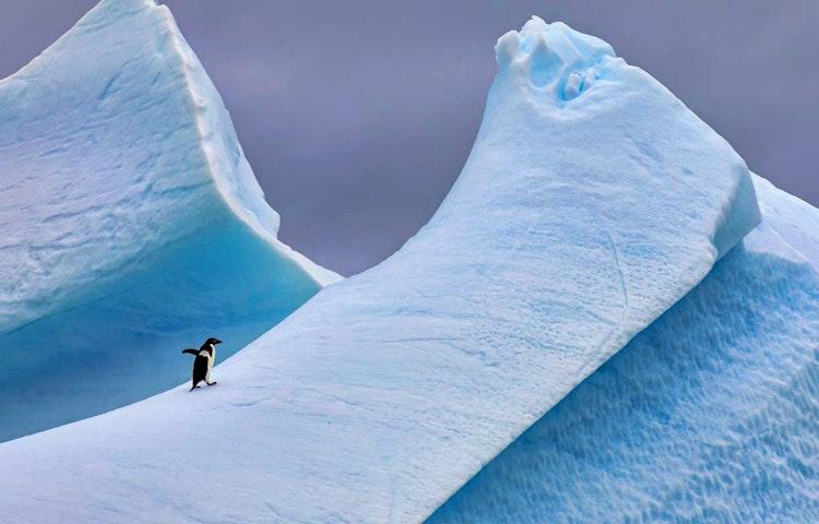 ice - Antarctica Crossing the Antarctic Circle Adventure Cruising