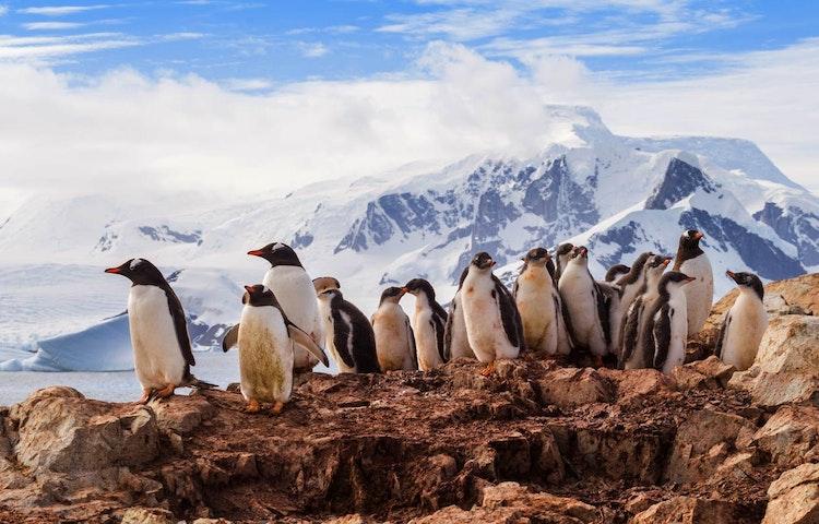 penguins - Antarctica Crossing the Antarctic Circle Adventure Cruising