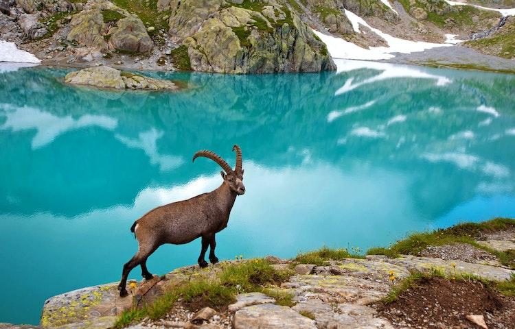 ibex - Alps Chamonix & Zermatt Hiking