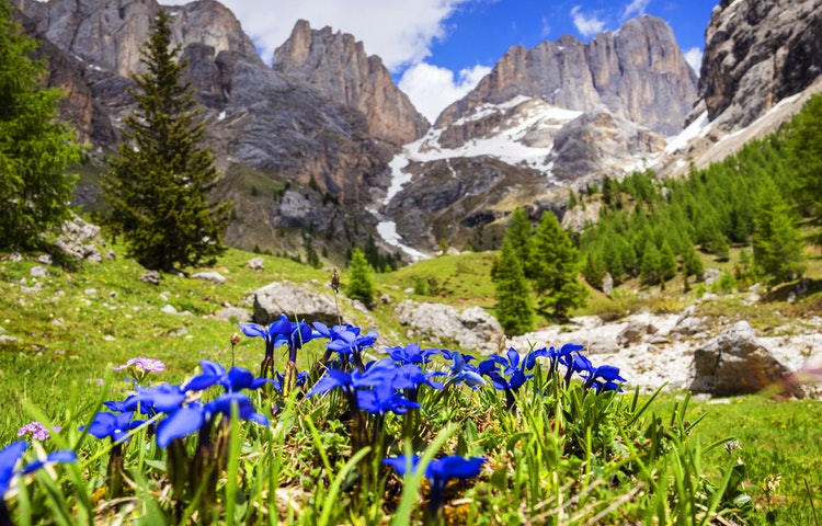 wildflowers - Italy Heart of the Dolomites Hiking