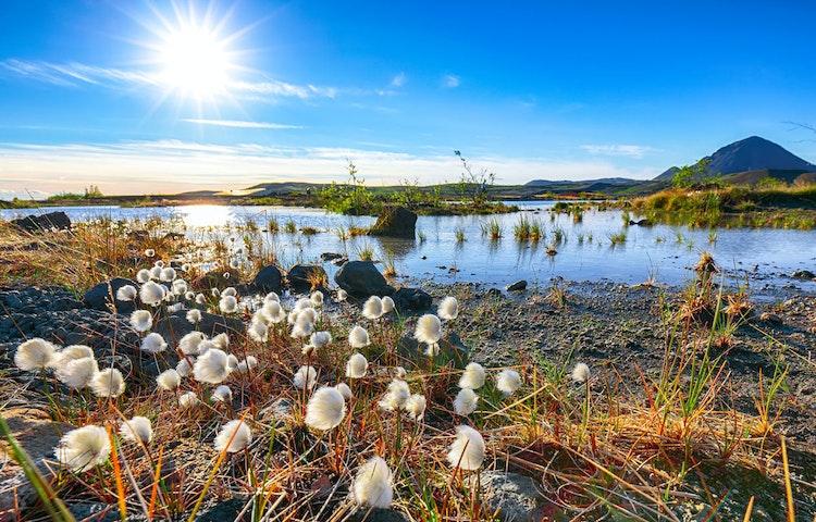flowers - Iceland Natural Wonders Hiking