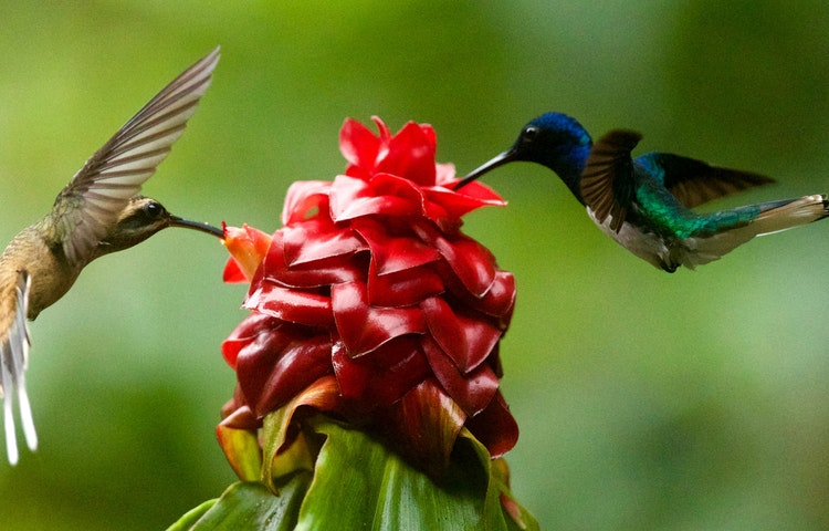 hummingbirds - Ecuador Galapagos Island Family Adventure Cruise