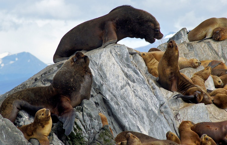 seals - Chile & Argentina Patagonia to the Sea Hiking & Cruise