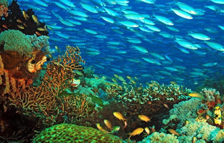 reef - Indonesia Raja Ampat Multi-Adventure