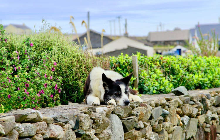 dog - Ireland West Coast Islands Private Adventure