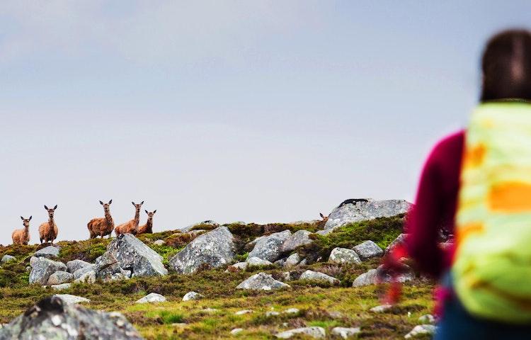 highland deer encounter - Scotland Western Isles Hiking Tour