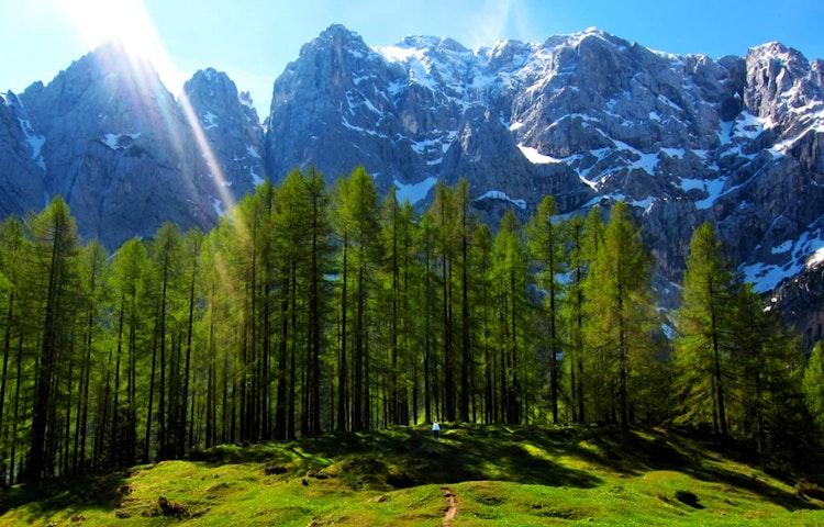 sunbeam forest - Austria, Italy & Slovenia Alpe Adria Hiking