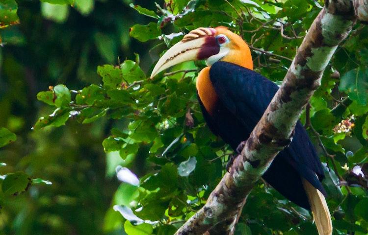 hornbill - Indonesia Raja Ampat Multi-Adventure