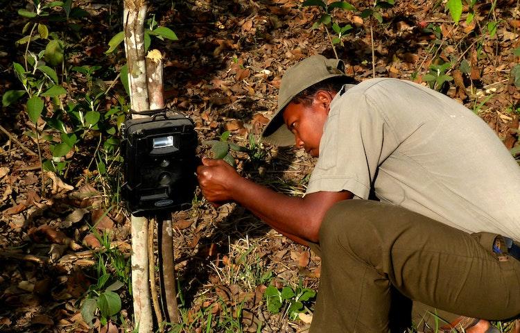checking camera trap - India & Nepal Save the Tiger