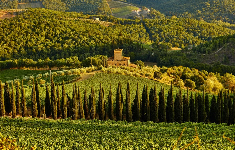 cypresses - Italy Tuscany and Umbria Walking