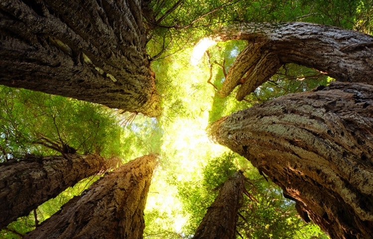 sequoias - California Yosemite National Park Hiking Adventure