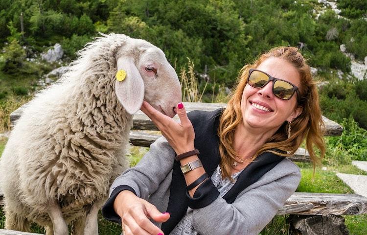 sheep - Slovenia Alps Hiking with Laurent Langoisseur