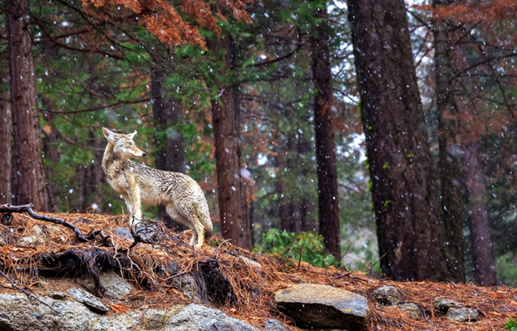 wildlife - California Yosemite National Park Hiking Adventure