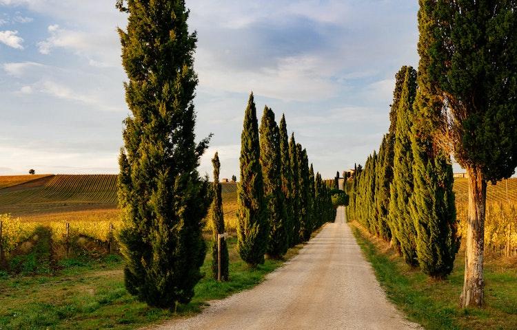 tuscan road - Italy Tuscany and Cinque Terre Walking