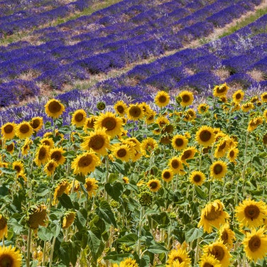 France Provence Walking Private Adventure
