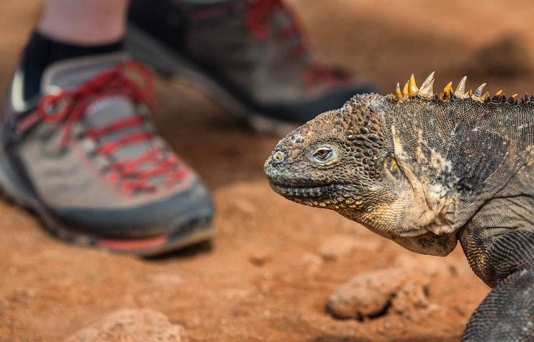 iguana and boots - Ecuador Galapagos Islands Private Adventure