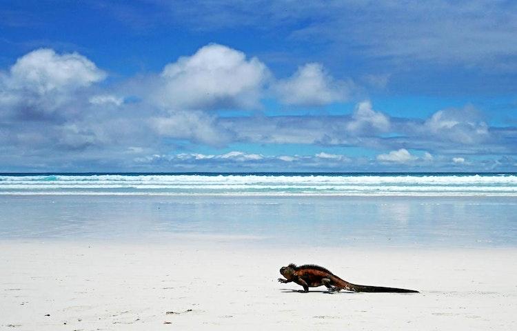 iguana on beach - Ecuador Galapagos Adventure Cruise on EcoGalaxy